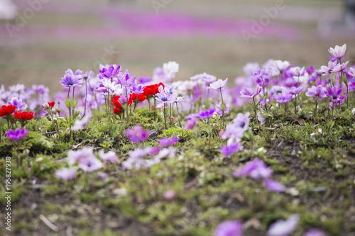 Foto op Canvas Purper 春の目覚め