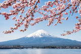 Fototapety Rosa Kirschblüte im Frühling am Berg Fuji in Kawaguchiko, Japan