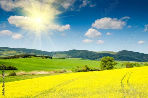 Keuken foto achterwand Geel beautiful rape field