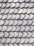 texture detail of  facade chapel covered of scallop shells on Toja Island, Galicia, Spain. - 195834782