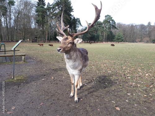 Aluminium Hert Beautiful fallow deer