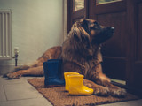 Dog by open door with rubber boots - 195839320