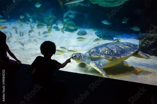 People watch for the sea life in the oceanarium of Kuala Lumpur