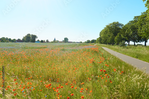 Fotobehang Klaprozen road through poppy field