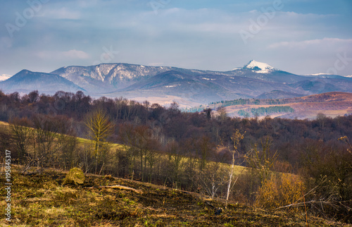 Foto op Canvas Bleke violet springtime landscape in Carpathian mountains. mountain ridge with Pikui snowy peak in the distance