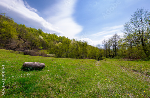 Sticker log on the grassy meadow among the forest. beautiful nature scenery in springtime