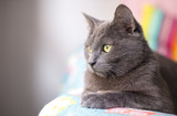 Cat portrait - 195853140