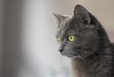 Cat portrait - 195853153