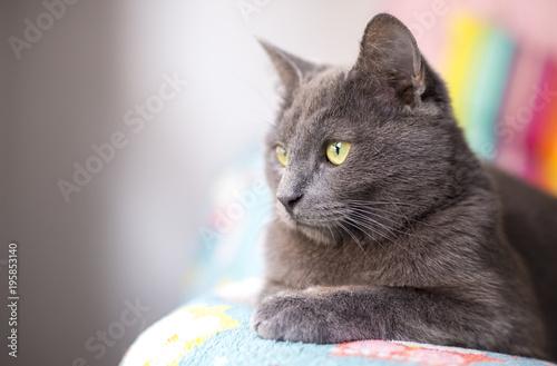 Fotobehang Kat Cat portrait