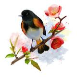 American Redstart bird watercolor painting