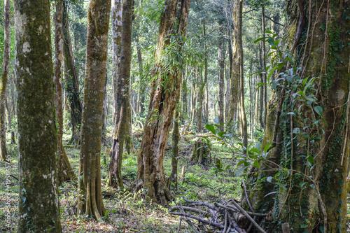 Staande foto Olijf Woodland landscape