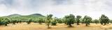 Panoramic view of Olive Farm. - 195868385
