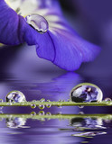 blue flower with a dew drop - 195877723