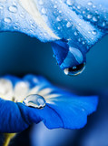 blue flower with a dew drop - 195877799