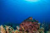 A piece of coral can be seen growing out of the reef below the surface of the warm blue sea. This section of reef is in the Caribbean and is home to an abundance of marine life