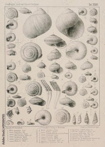 Fossil shells. - 195884785