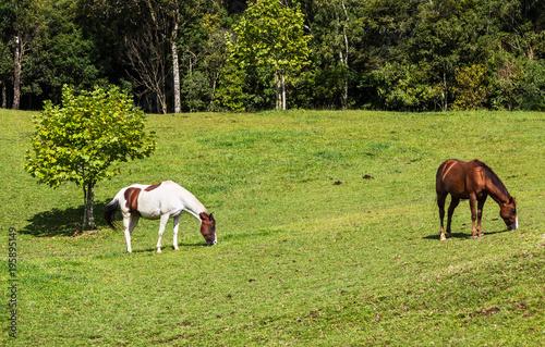 Fotobehang Paarden Dois cavalos pastando.
