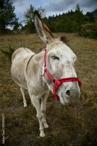 Fotobehang Paarden âne qui souri