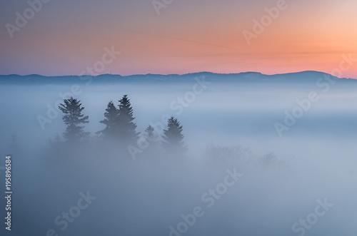 Mglisty lasy krajobraz w ranku