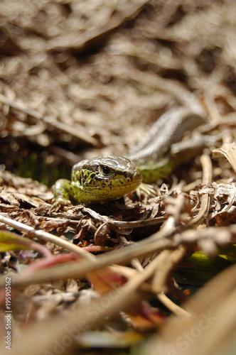 Aluminium Kameleon animal lizard