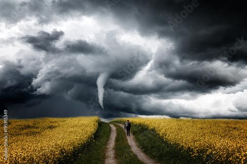 Fototapeta Einsamer Mensch auf dem Rapsfeld geht Richtung Tornado