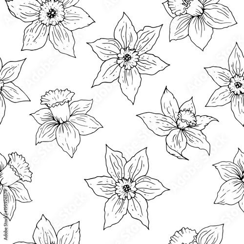 Daffodil kwiat wektor wzór. Czarni kwieciści kontury na białym tle