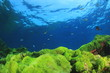 Green algae blue ocean
