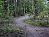 Green Forest Path - Trail through a dark green forest landscape. - 195936575