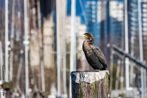 Fotobehang Eagle cormorant resting on top of pile on the dock under the sun