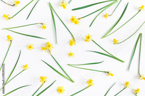 Flowers composition. Spring narcissus flowers on white background. Flat lay, top view - 195955532