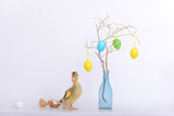 Little duckling and eggs shell and easter decoration - 195965782