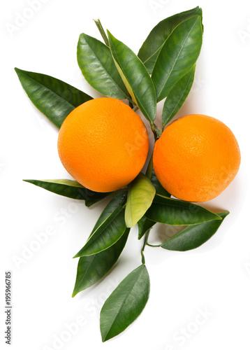 Twig of orange with fruits.