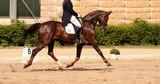 horse in dressage in different garden. - 195975315