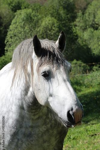 Fotobehang Paarden cheval