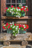 Petunia flowers pots on the window of a wooden rustic log cabin in the Alps, Aosta Valley, Italy