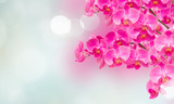 pink orchid branches - 195995717