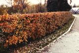 Дорожка осеннего парка - 196006355