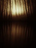 forest reflection in dark lake