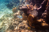 Fishes swimming in the Caribbean Sea of Mexico - 196027952
