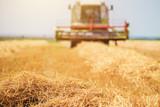 Combine harvester machine harvesting ripe wheat crops - 196049583