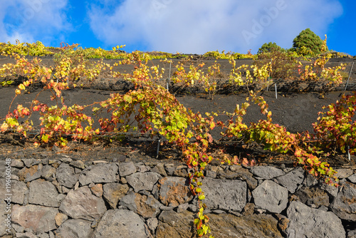 Foto op Canvas Wijngaard Vineyards of Fuencaliente in Autumn, La Palma, Spain
