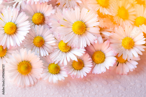 Selective focus of daisy flowers vintage color style for nature background