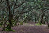 A path through the enchanted forest on the