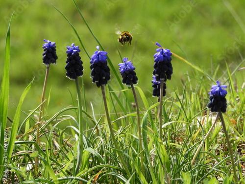 Fotobehang Lavendel abeille butine