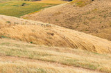 Yellow dry grass on hill face background - 196103147