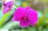 pink orchids at botanical garden