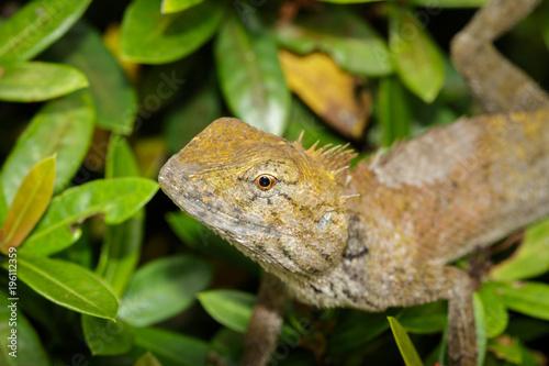 Aluminium Kameleon Image of chameleon on a green leaf. Reptile, Animal.