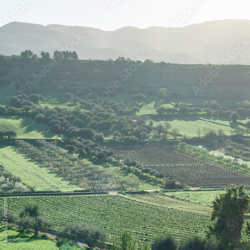 Foto op Canvas Wijngaard vineyard in Italy