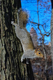 usa new york central park squirrel - 196127363