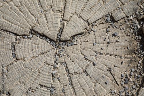 Foto op Canvas Brandhout textuur Wooden Texture